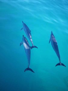 delfini Napali coast